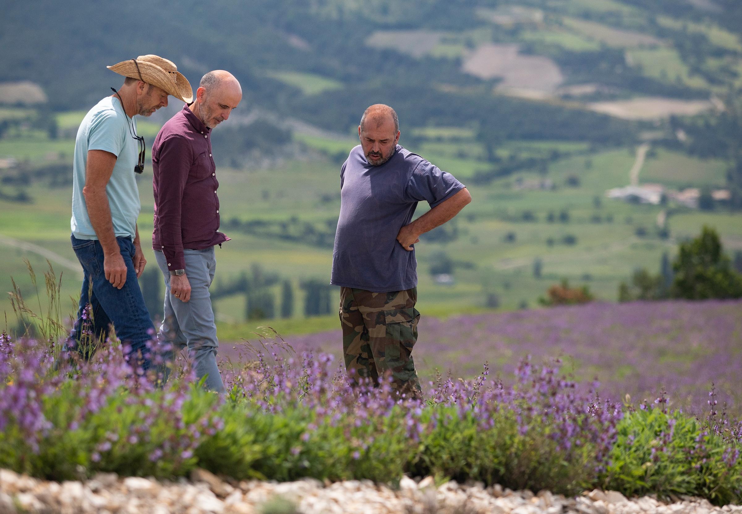 Three men looking at flowering sage plants on a hillside in Europe