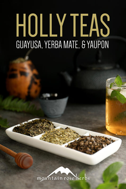 Three varieties of holly teas including yerba mate, guayusa, and yaupon.