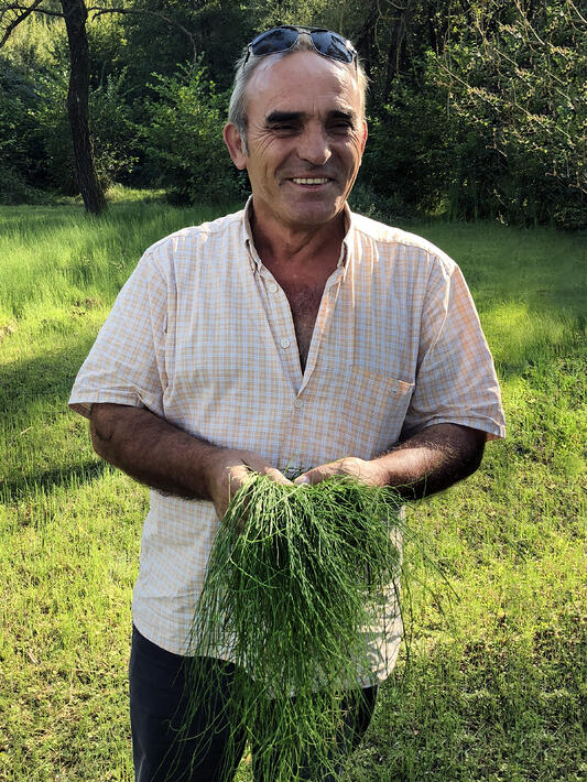 An Albanian farmer smiles as he shows off his freshly picked horsetail. Surrounded by green grass and trees, he looks very happy.