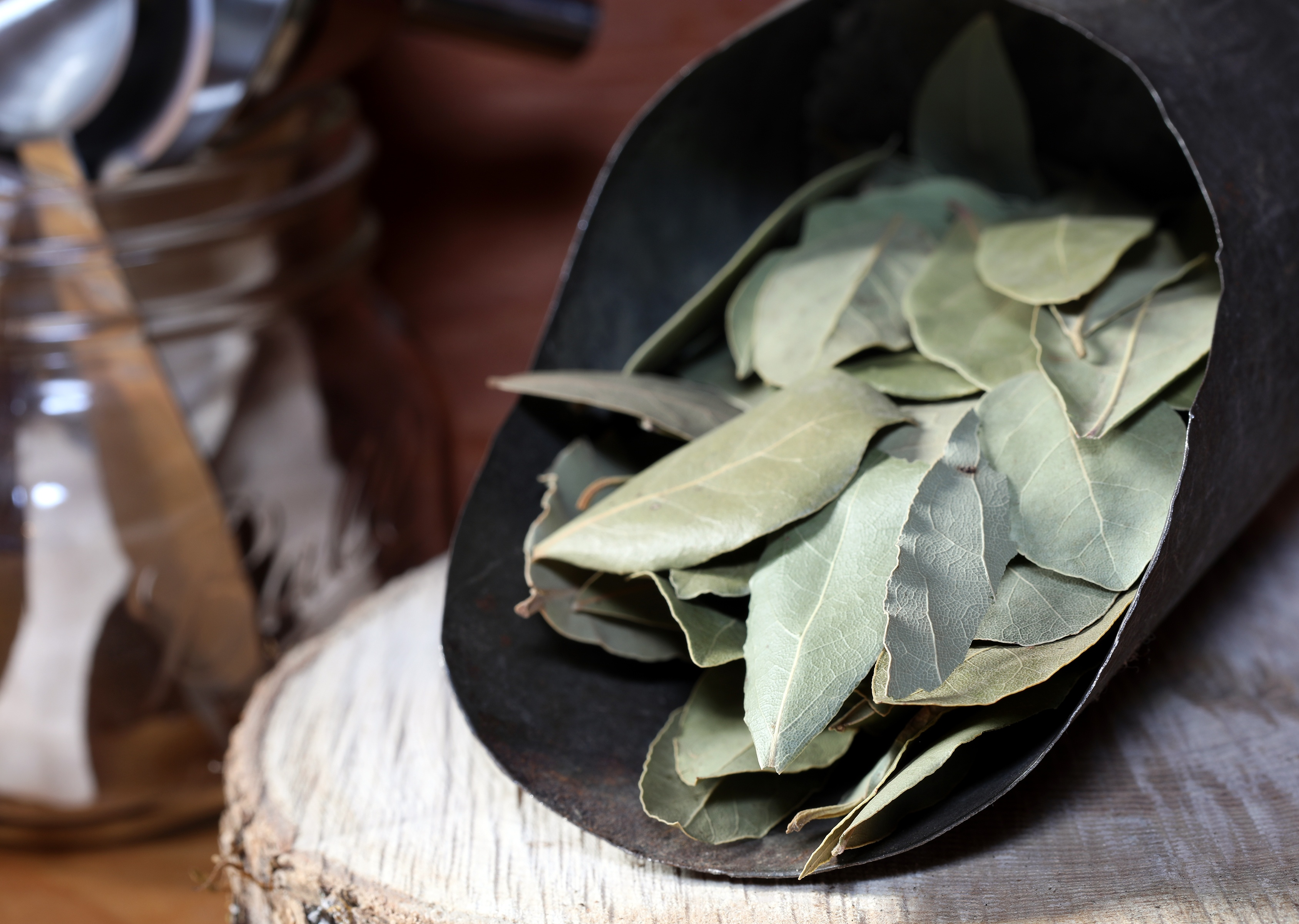 Bay Leaves in herbal apothecary near cooking utensils
