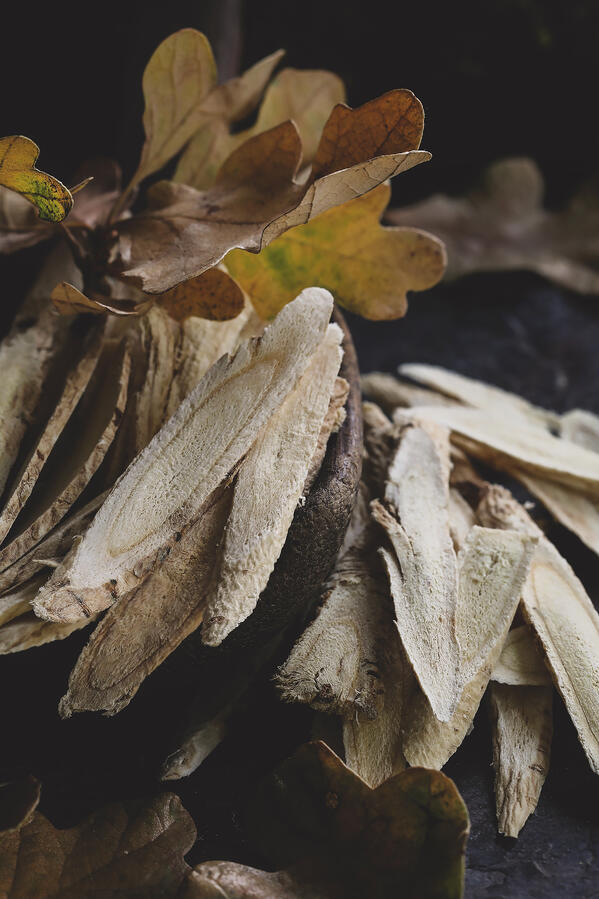 Astragalus root with autumn leaves.