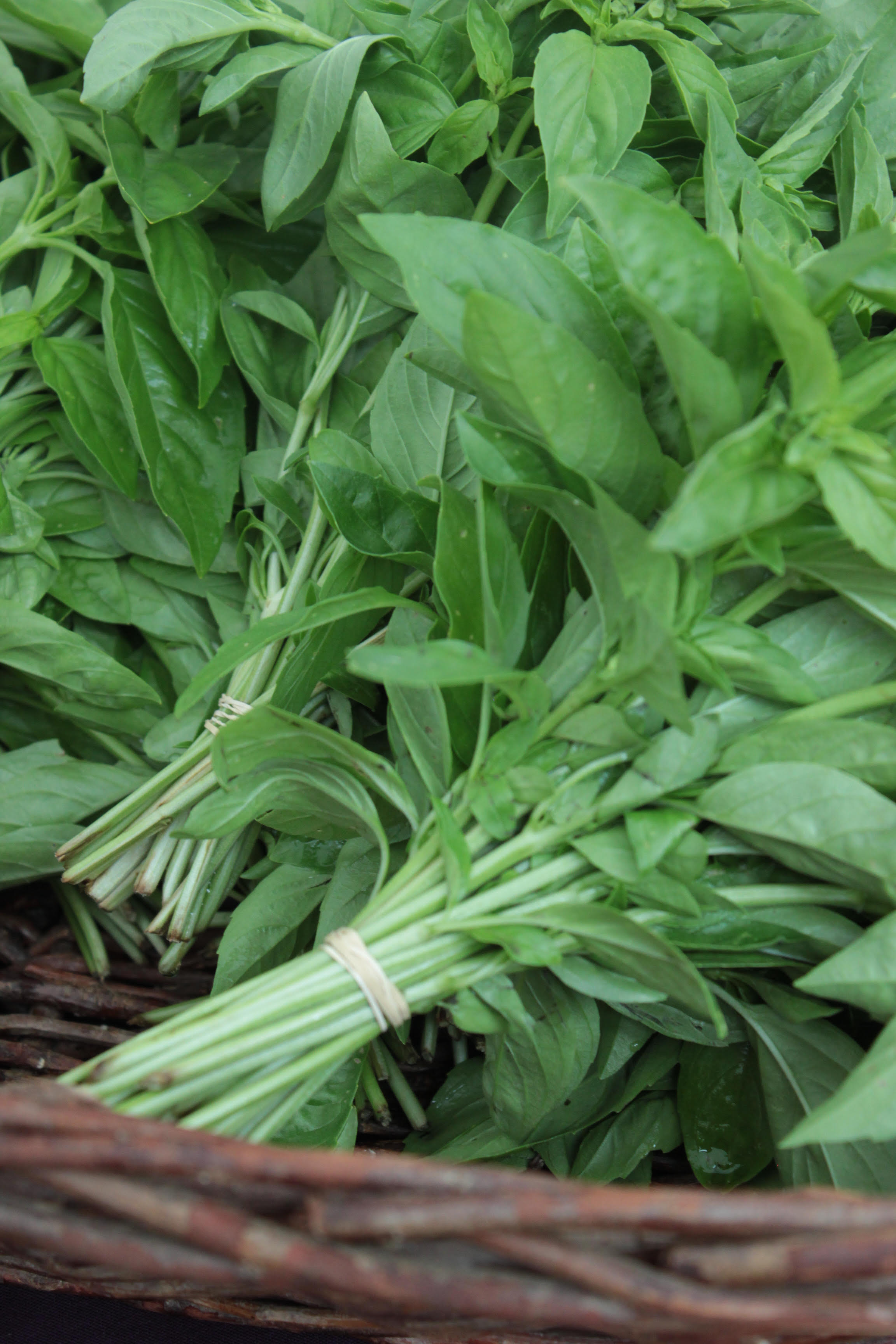 Close up of bunches of fresh basil from farmers market