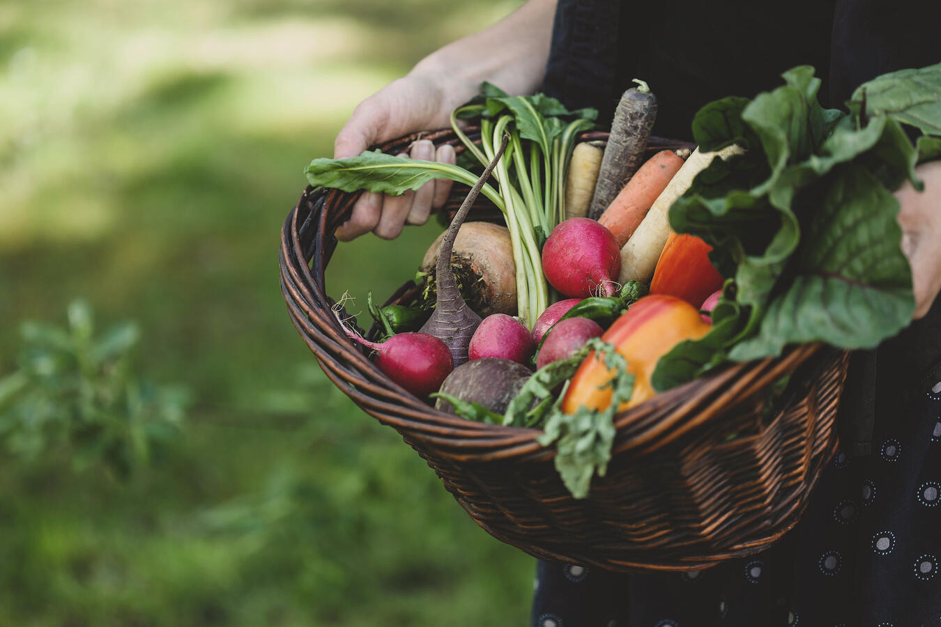 A basket filled with a rainbow of organic vegetables.