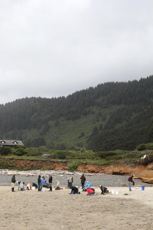 People standing and kneeling to pick up trash on sand on Oregon Coast