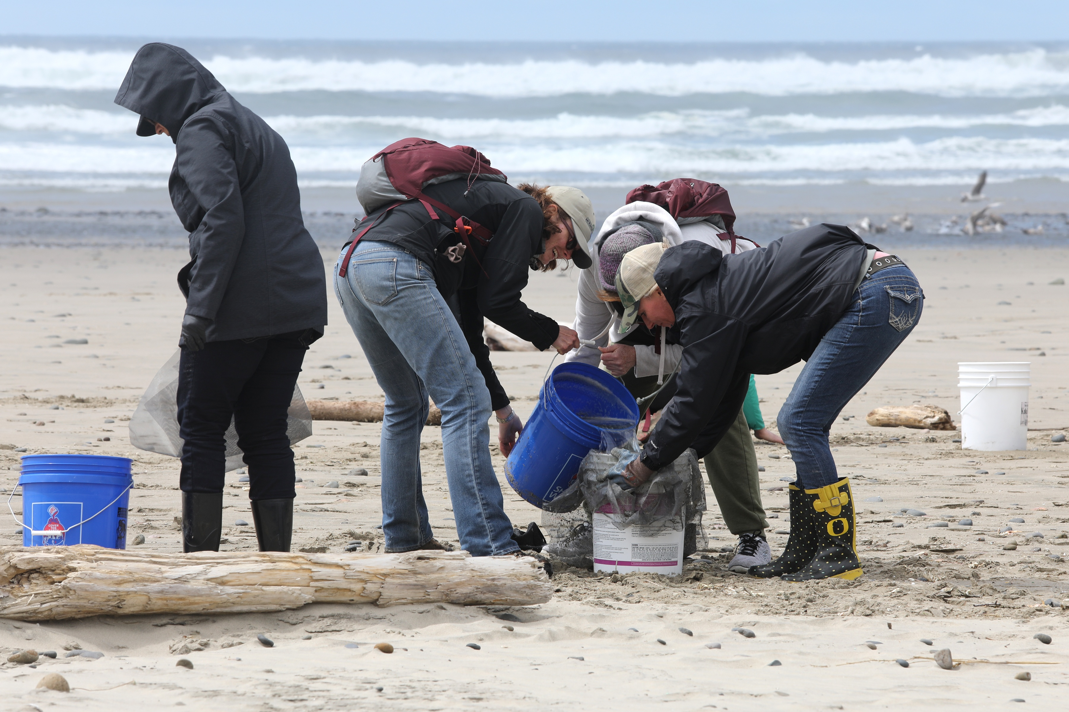 Group of people working together to sift microplastic into buckets on Oregon Coast