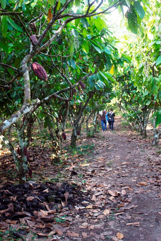 Trail in Peru to See Cacao Trees with Cacao Farmers