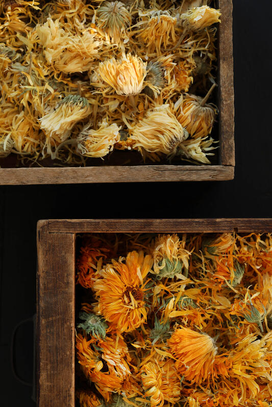 Calendula flowers can range from pale yellow to vibrant orange in color. A variety of reasons will affect the finished harvest of a plant, including weather, timing, location, and more.