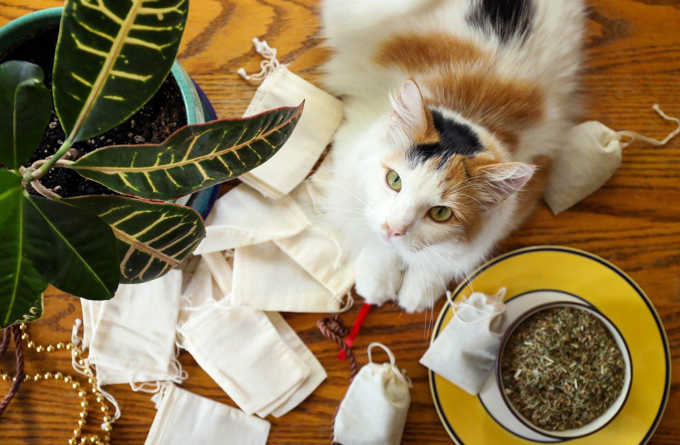 Beautiful calico cat with muslin bags and bulk catnip ready to make catnip tea bag toys.