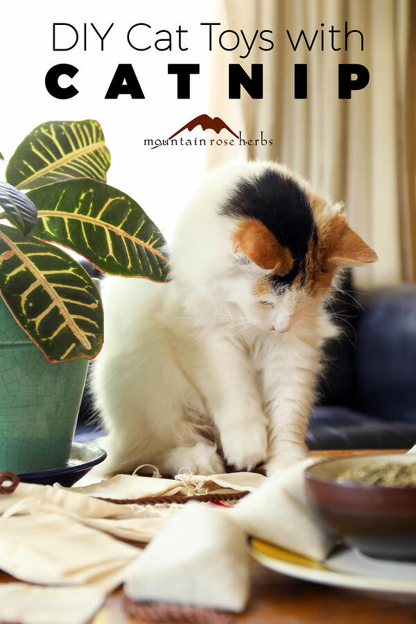 Catnip:Beneficial Herb for Humans and Cat Enrichment Pinterest Pin for Mountain Rose Herbs