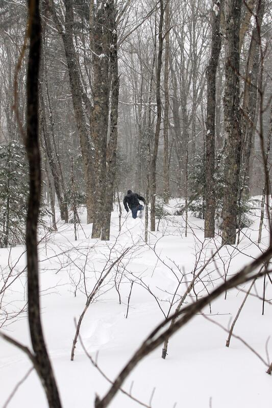 Person snowshoeing through snowy forest