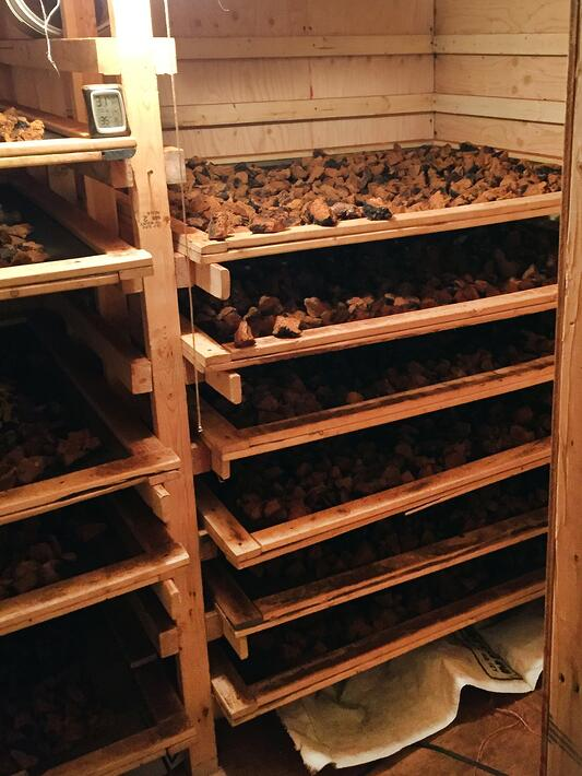 Wooden drying racks filled with chaga mushrooms