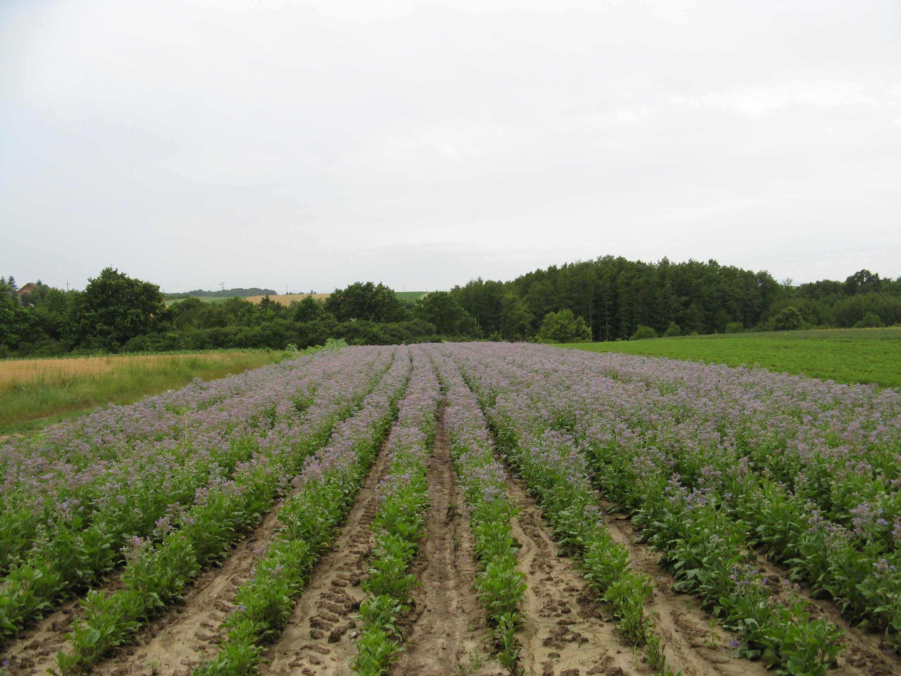 Cultivated farm plot in Croatia