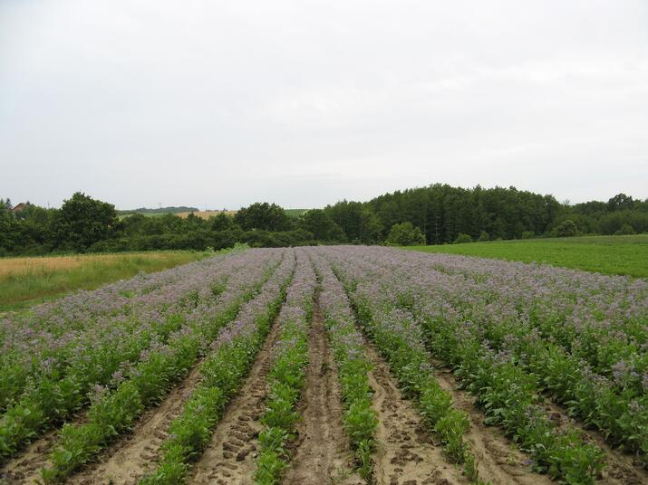 Cultivated farm plot in Croatia