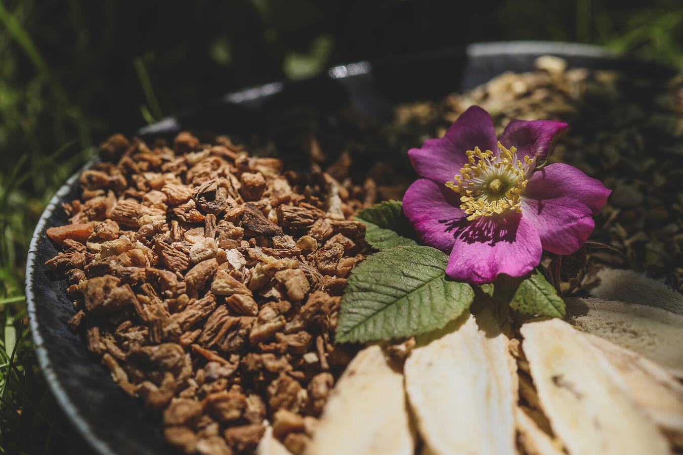 TCM herbs and a wild rose