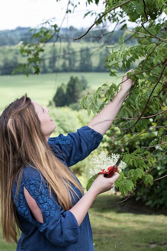 Woman wearing blue in green field picking elder flowers fresh from elder tree
