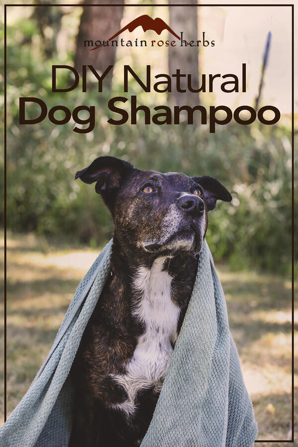 Homemade Organic Dog Shampoo with Soothing Tea Base Pinterest pin for Mountain Rose Herbs.
