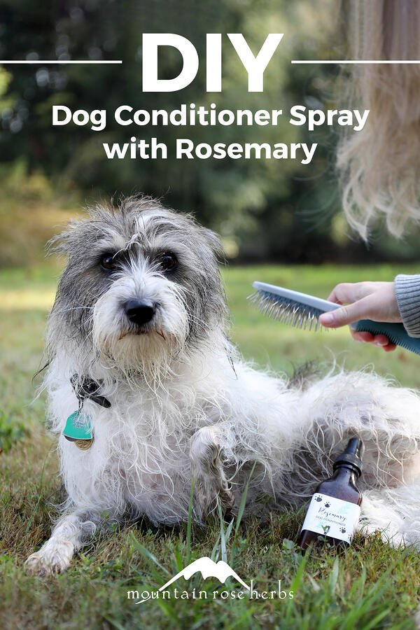 Leave-In Conditioner Recipe for Dogs Pinterest pin for Mountain Rose Herbs