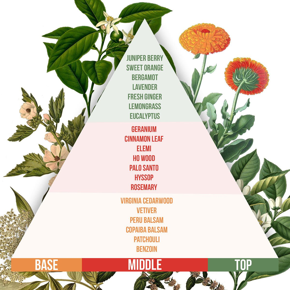 Essential oil blending guide pyramid with base, middle, and top notes.