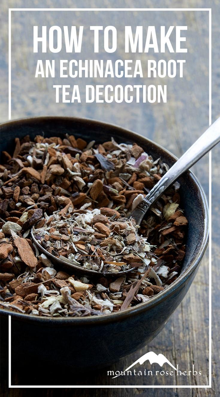 Echinacea Root Tea Decoction Blend Recipe Pin