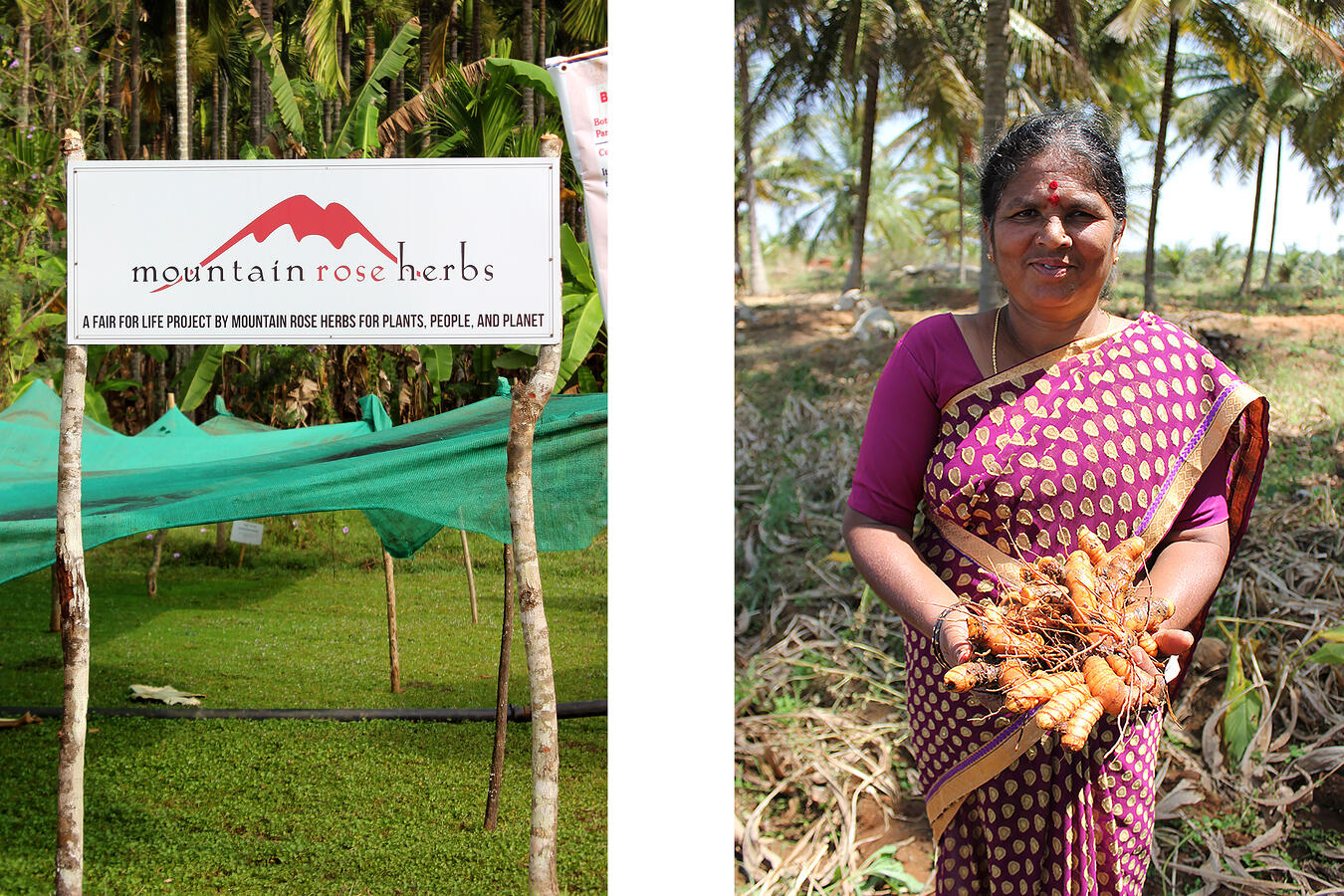 Mountain Rose Herbs Fair for Life project sign and woman in India holding turmeric root
