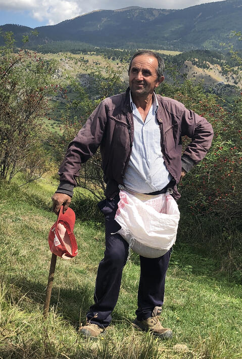 Albania farmer Misir pauses from harvesting rosehips in the countryside.