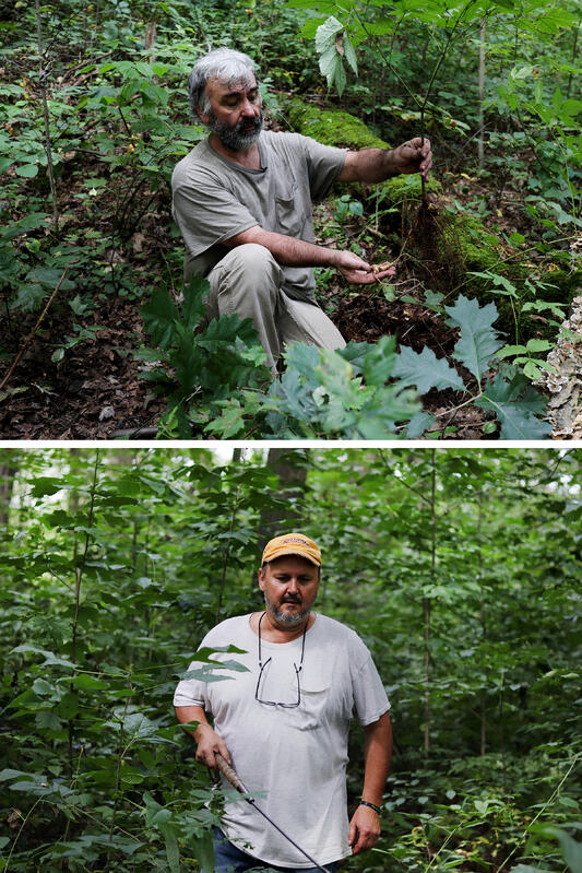 Portraits of wild ginseng farmers digging up ginseng roots in the dark green Appalachian forest.