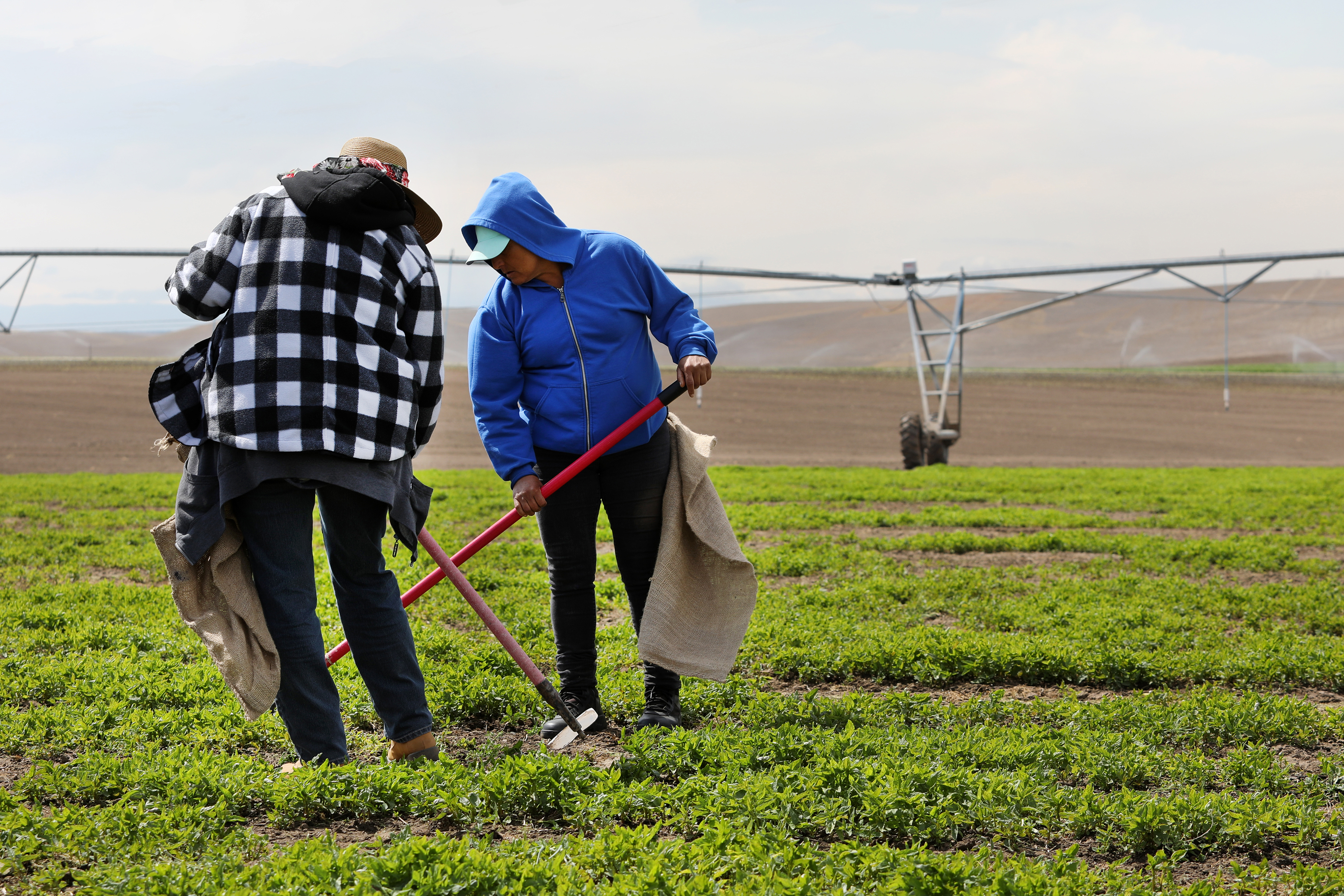 Two people working in the field of a farm with irrigation in the background.