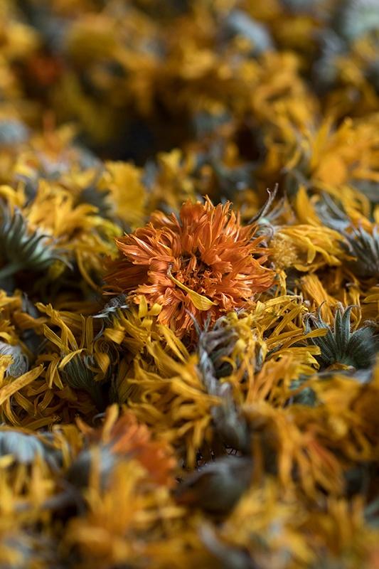 Bunches of fresh orange and yellow calendula flowers