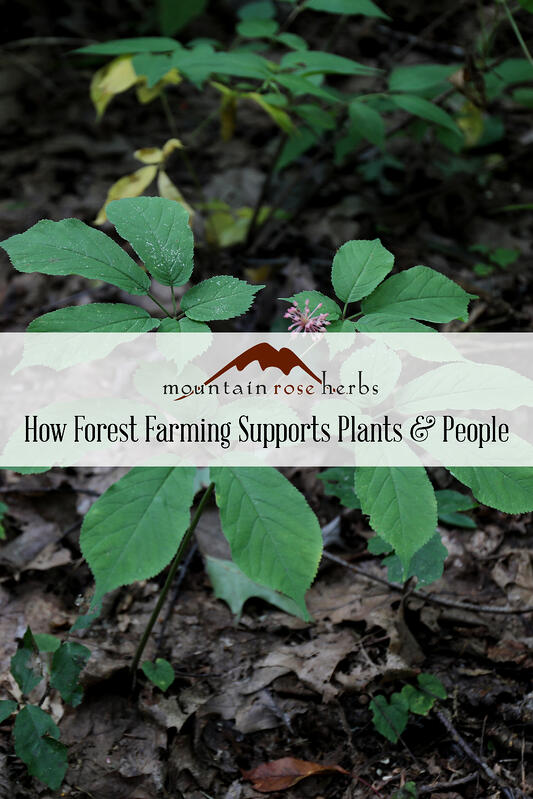 Pinterest Pin for How Forest Farming Support Plants & People in Appalachia. Features ginseng leaf.