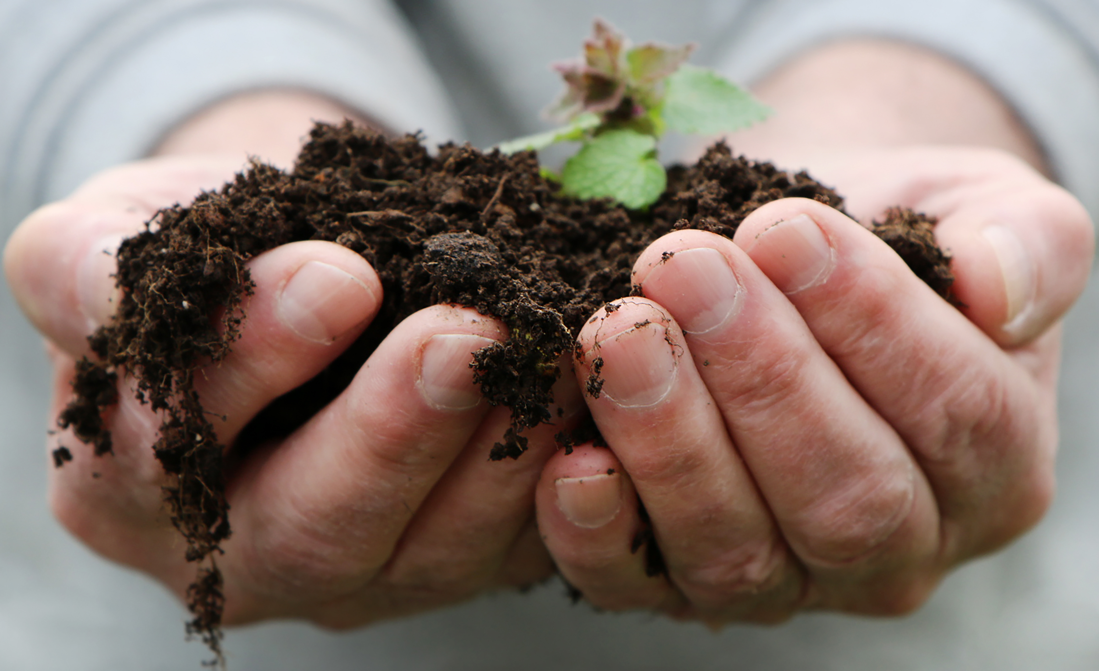 Hands holding a clump of healthy soil to transplant new growth as a part of company sustainability practices.