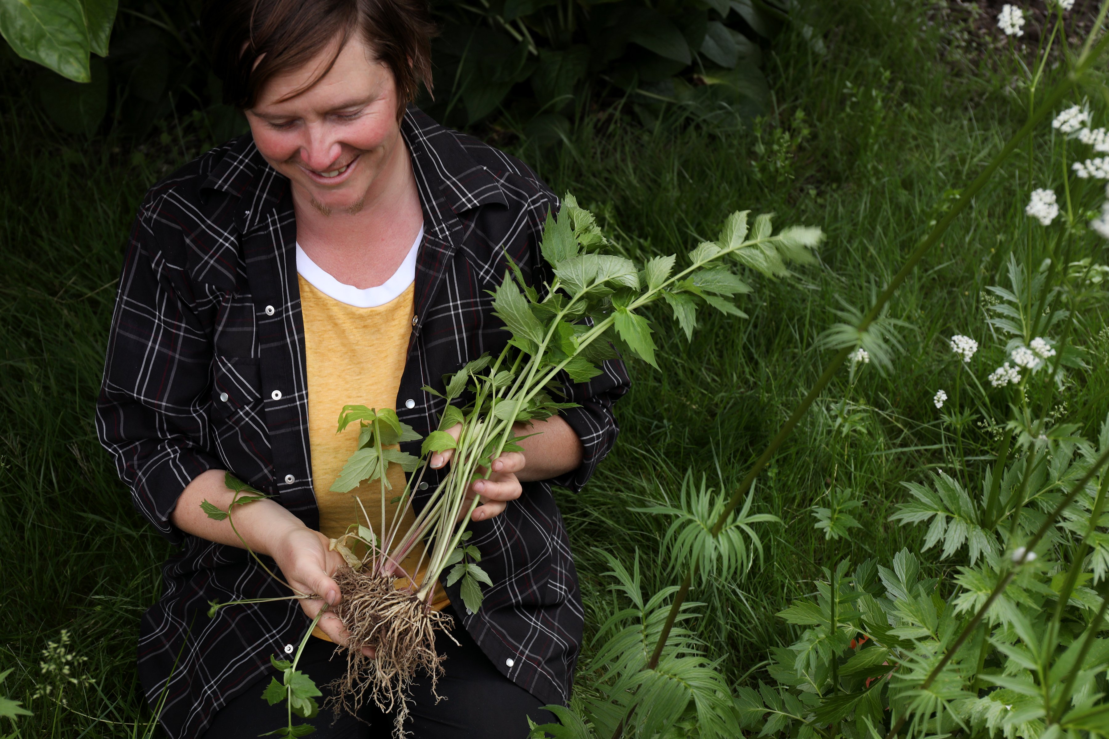 Plant biologist, Heron Brae, identifies botanicals for Mountain Rose Herbs to keep in their herb library for reference material. Here she harvests wild valerian after correctly identifying the species.