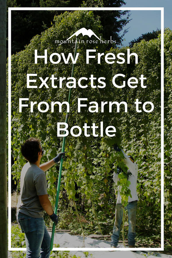 From Farm to Bottle: The Story of Our Hops Pinterest pin for Mountain Rose Herbs