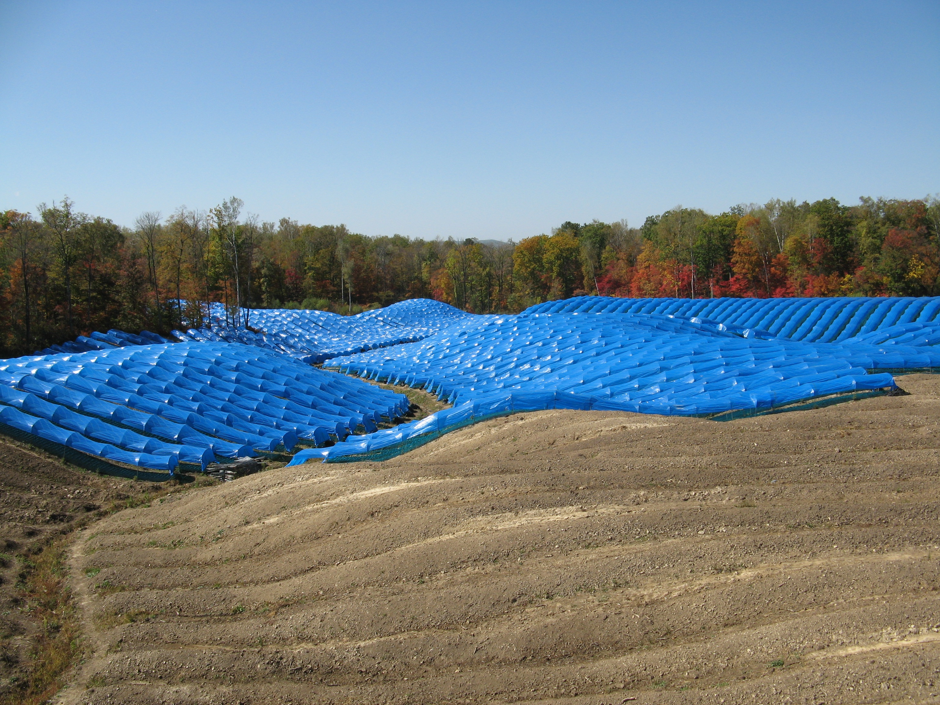 Hoop houses made from blue plastic shade red ginseng in a field in China