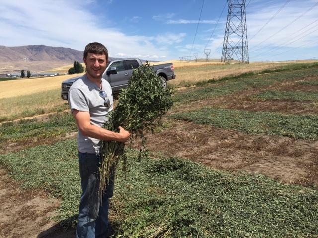 Farm Stories: Fields of Mint