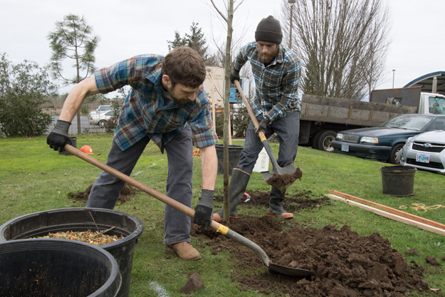 Mountain Rose Staff Planting Native Trees at West Eugene Facility