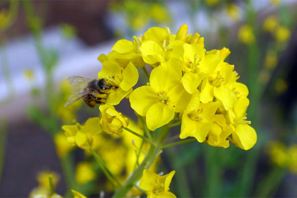 Working With Beyond Toxics to Protect Pollinators