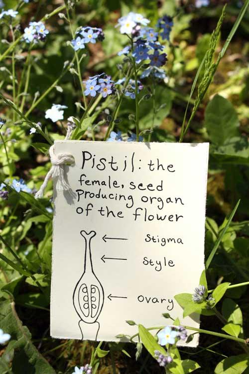 BotanicalFlashCard