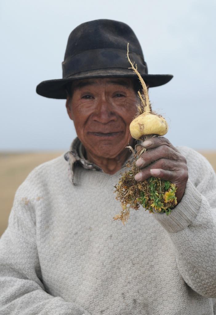 Maca farmer holding maca root.