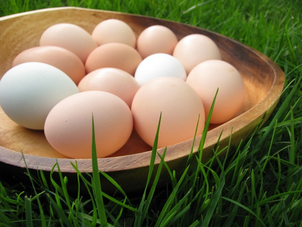 Plate of light brown eggs sitting in the grass