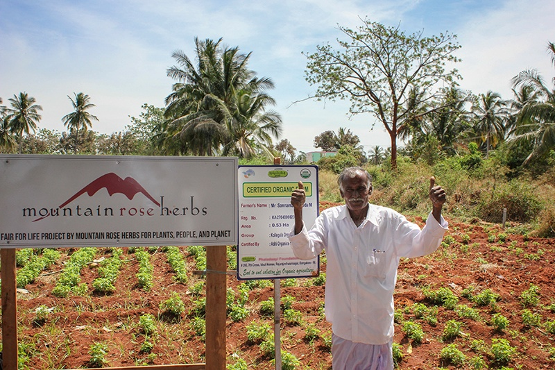 Indian farmer in white clothing standing in front of his certified organic and fair trade field of crops and giving two thumbs up.