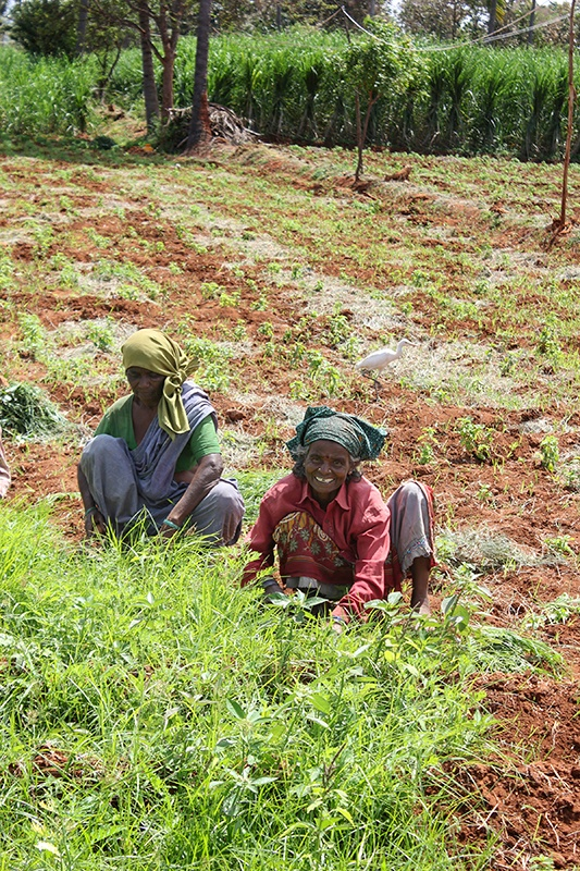 Women farmers in India tending their fields of organic crops while one smiles for camera.
