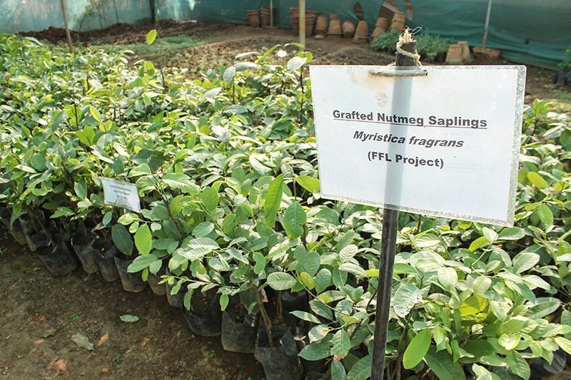 Ensuring a Fair Trade Future - Mountain Rose Herbs