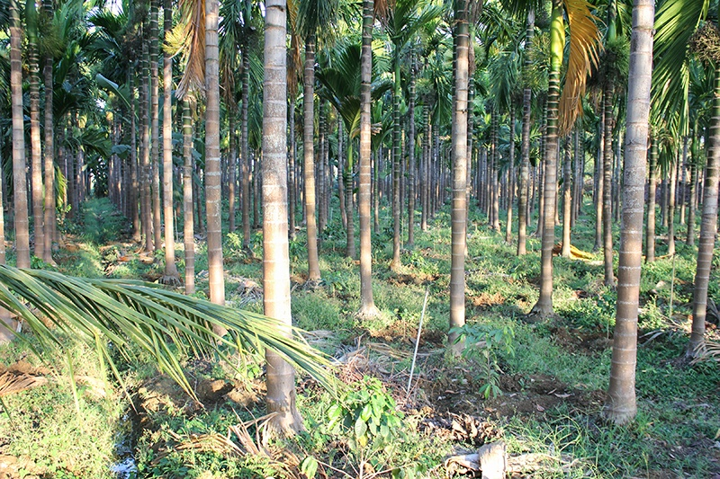 Field of organic and fair trade plants in India