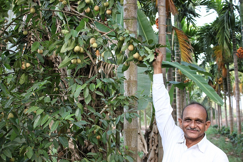 Smiling man holding branch on his fair trade and organic farm in India
