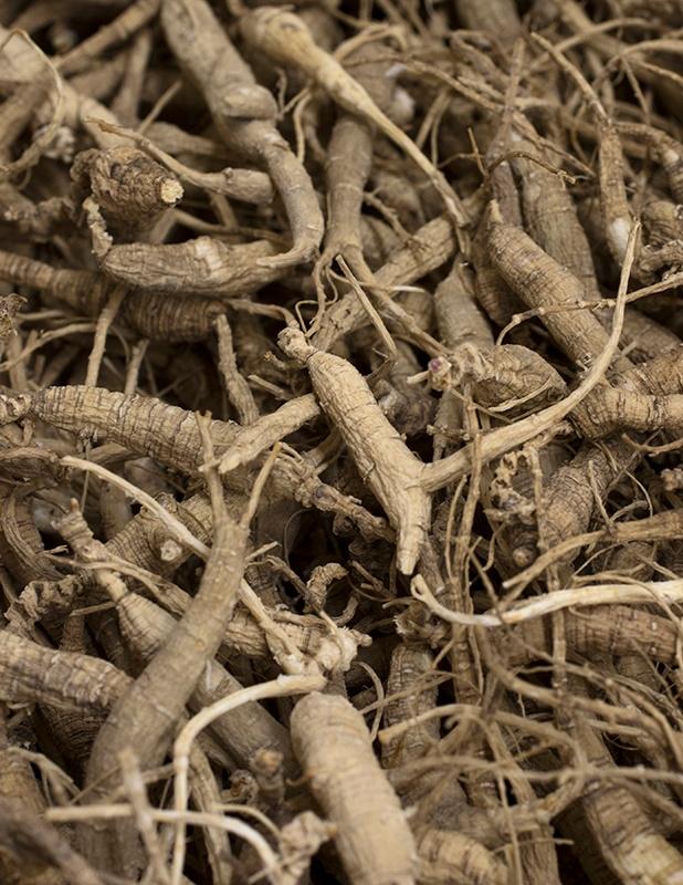 Northwest Farm Stories: Growing Goldenseal & Ginseng