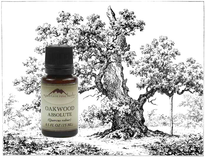 Oakwood Absolute from Mountain Rose Herbs - Aromatherapy and Perfumery