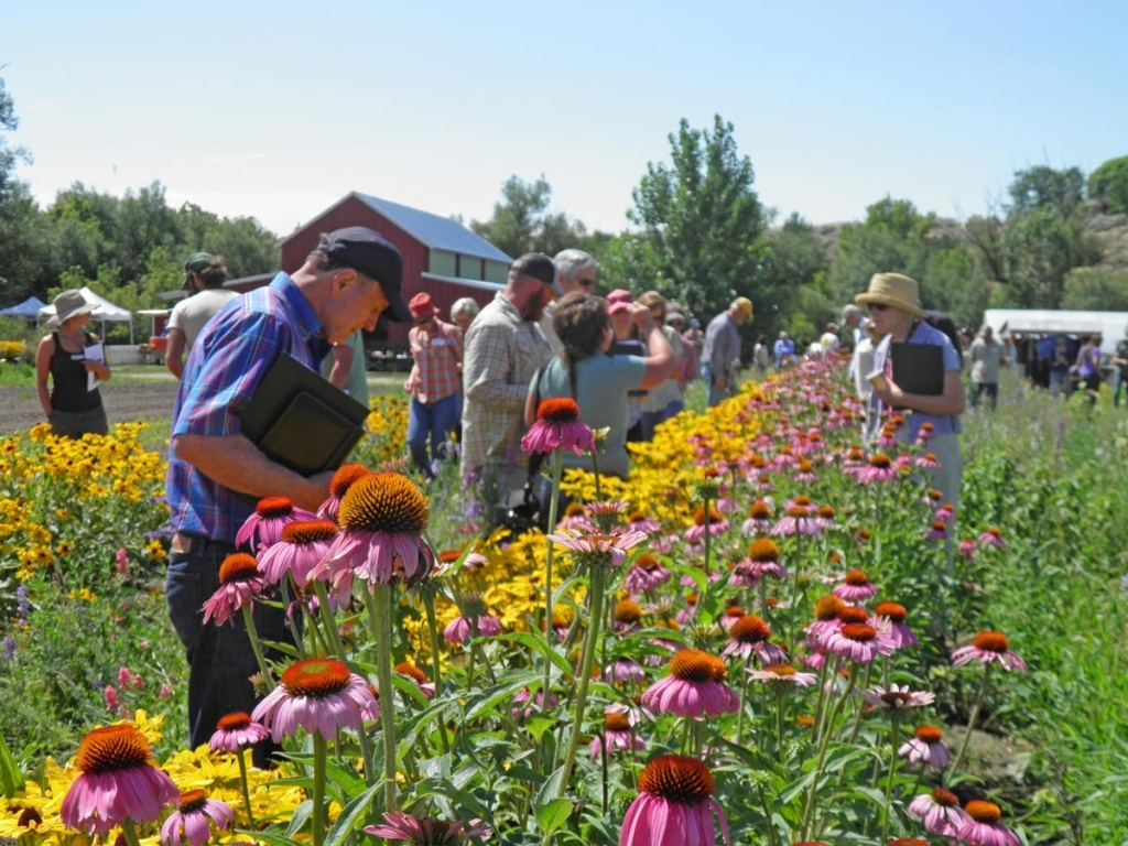 People Enjoying Flowers
