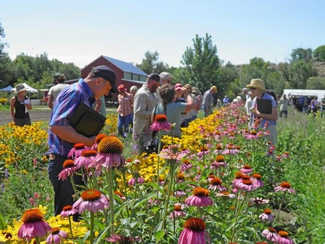 People Enjoying Flowers