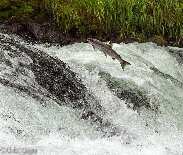Protect Wild Fish!