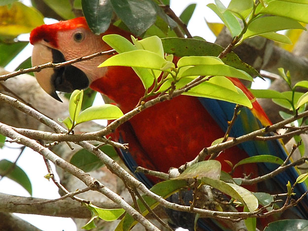 Preserving Biodiversity in Disappearing Rainforests
